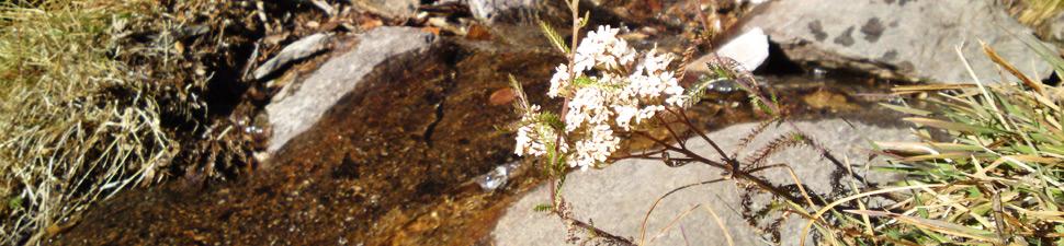 bergland-header_sommer-1